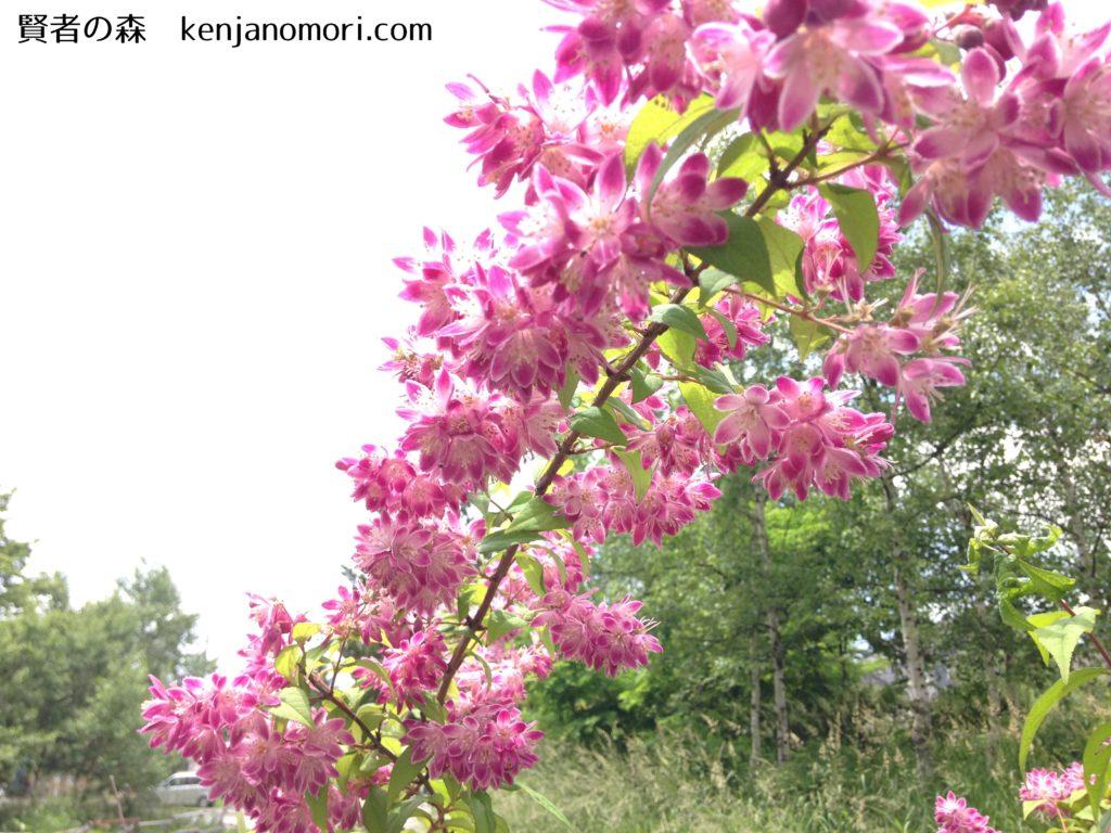 月 咲く 5 花 に ピンク の
